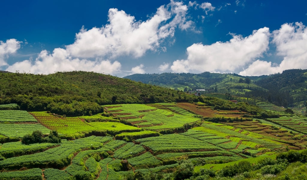 Ooty - 2 days in Bangalore